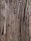 Tree bark background. Tree bark, perfect background for multiple purposes Royalty Free Stock Images