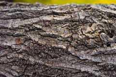 Tree bark Royalty Free Stock Photos