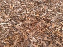 Tree bark pieces Stock Photo