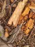 Tree bark pieces Royalty Free Stock Photography