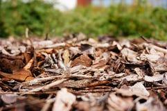 Tree bark pieces Stock Image