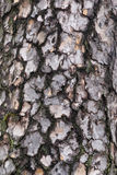 Tree bark Stock Photos