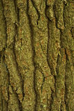 Tree Bark, Pink Beds Area, Pisgah NF. NC royalty free stock image