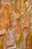 Tree Bark - Platanus acerifolia Stock Photography