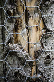 Tree bark protected with chicken wire Stock Photography