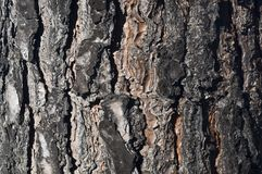 Tree bark ridges. Macro tree bark contrast deep crevices and ridges of a mediterainean pine royalty free stock photo