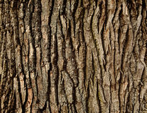 Tree bark. Rough tree bark horizontal format Royalty Free Stock Photography