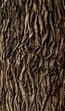 Tree bark. Rough tree bark vertical format royalty free stock photos