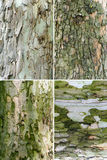 Tree bark, set of four Stock Photography
