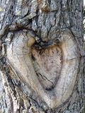 Tree Bark in Shape of Heart on Tree in Garden. Royalty Free Stock Photography