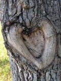 Tree Bark in Shape of Heart on Tree in Garden. Stock Image