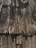 Tree bark shingle background. Stock Photos