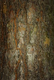 Tree bark with slightly grungy effect Royalty Free Stock Image