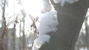 Tree bark and snow macro. Winter bright sunlight stock video footage