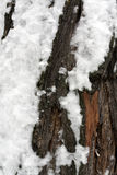 Tree bark in snow. Stock Photography