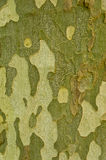 Tree Bark, Structure, Texture, Pattern, Background Stock Images