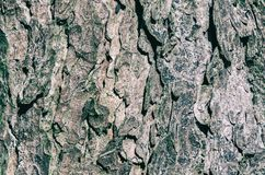 TREE BARK. Structure of a tree trunk Royalty Free Stock Images