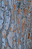 Tree Bark Suitable For Use As A Background Or Backdrop Royalty Free Stock Photo