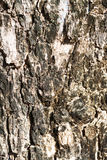 Tree Bark in Sunlight time passing Stock Image