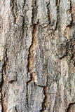 Tree Bark in Sunlight time passing Stock Photos