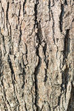 Tree Bark in Sunlight time passing Stock Photo