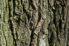 Tree bark surface Stock Image