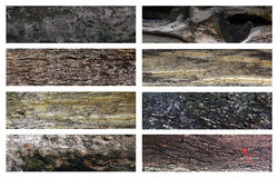 Tree bark surface. Set of tree bark surface that is a natural good texture royalty free stock photo