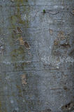Tree Bark Stock Images