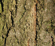 Tree Bark Texture. A close-up of tree bark. Useful for textures and backgrounds Stock Image