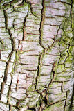 Tree bark texture Royalty Free Stock Photos