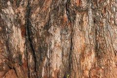 Tree bark texture. From an old tree Royalty Free Stock Photos