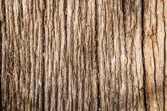 Free Tree Bark Texture Stock Photos - 30610443