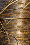 Tree bark texture. Natural background Stock Photography