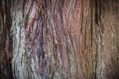 Tree Bark Texture Royalty Free Stock Photography