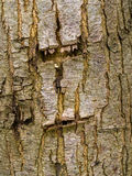 Tree bark texture background pattern Royalty Free Stock Photography