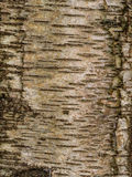 Tree bark texture background pattern Stock Images