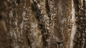 Tree bark texture stock video footage