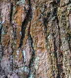 Tree bark texture background Royalty Free Stock Photos