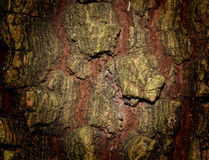 Tree Bark. Texture a background Stock Photography
