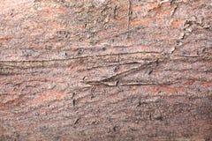 Tree bark texture/background. Tree bark texture/background/backdrop Stock Photo