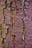 Tree bark texture. Background fortes Royalty Free Stock Photography