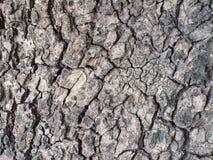 Tree bark texture background. Old Tree bark texture background stock image