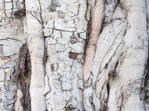 Tree bark texture background. Old Tree bark texture background stock photos