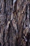 Tree bark texture background. Royalty Free Stock Photos