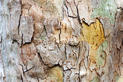 Tree bark texture background. Tree bark texture, old wood background Stock Photo