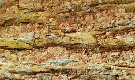 Tree bark texture background. Panoramic photo of the tree bark texture Royalty Free Stock Photo