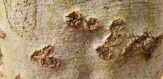Tree bark texture background. Panoramic photo of the tree bark texture Royalty Free Stock Photos