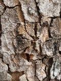 Tree bark Texture Background Pattern. A Tree bark Texture Background Pattern Stock Photography