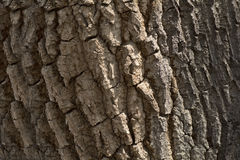 Tree Bark Texture Background Pattern. Detail of Tree Bark Texture Background Pattern Stock Photography