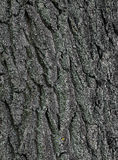 Tree bark texture background. Relief bark of an old tree close-up background Stock Image